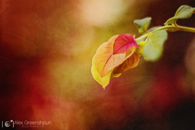 colors_of_autumn_1_900_by_alexgphoto-d6nrxoi