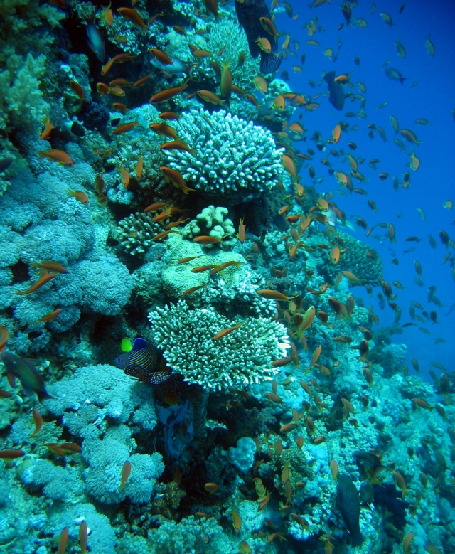 coral_reef_by_mikeosoerensen