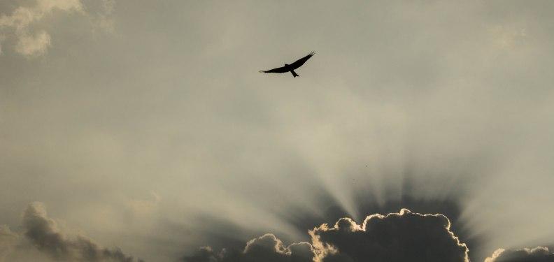 fly_like_an_eagle_by_karz09-d6z0c9e
