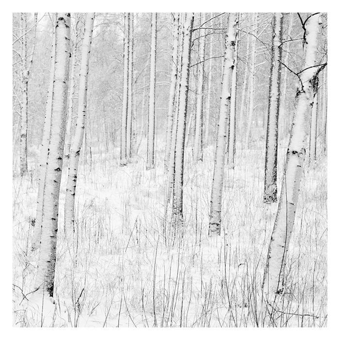 winter_by_jjuuhhaa_d1ai7qu
